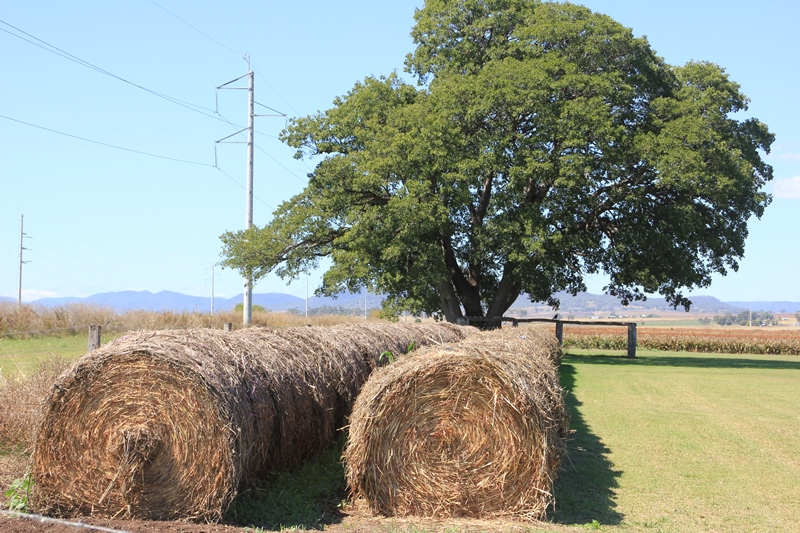 Round bales of hay - Allora