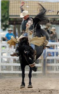 Rodeo Saddle Bronc Ride