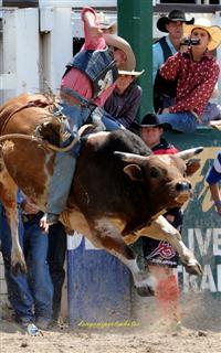 Warwick Rodeo bull riding